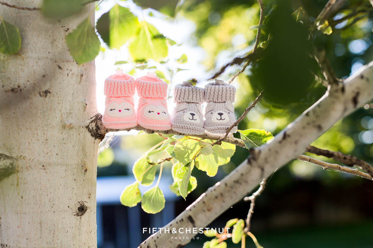 Twin Gender reveal with pink booties and gray booties on an aspen tree branch