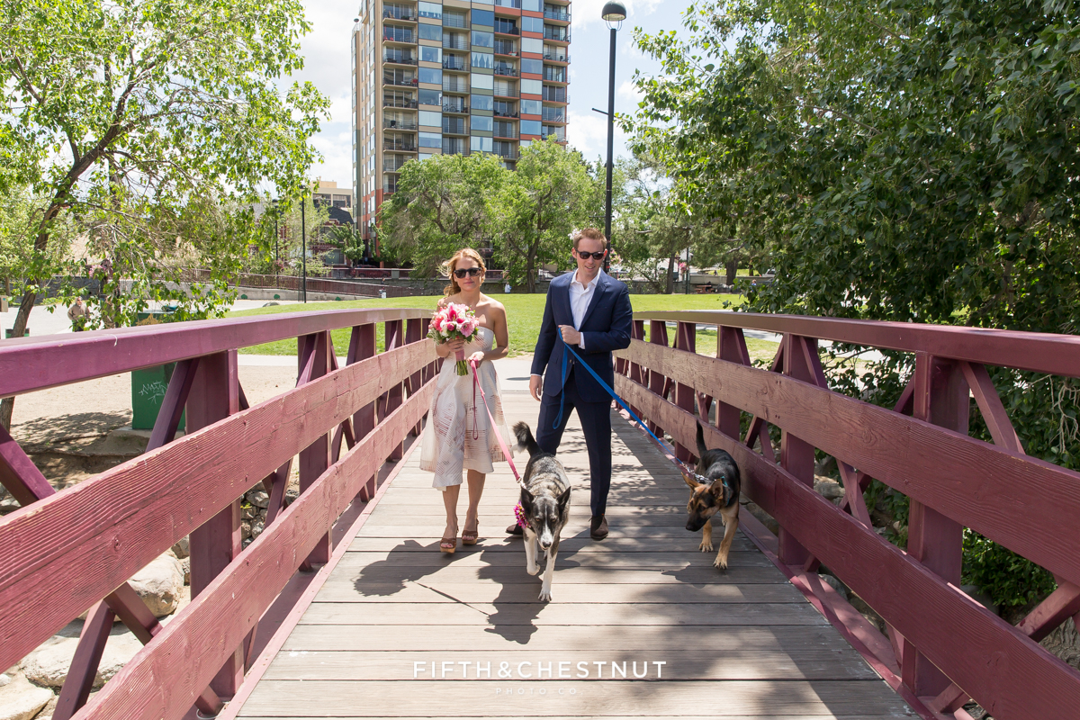 bride and groom walking dogs during their Downtown Reno elopement by Reno Wedding Photographer
