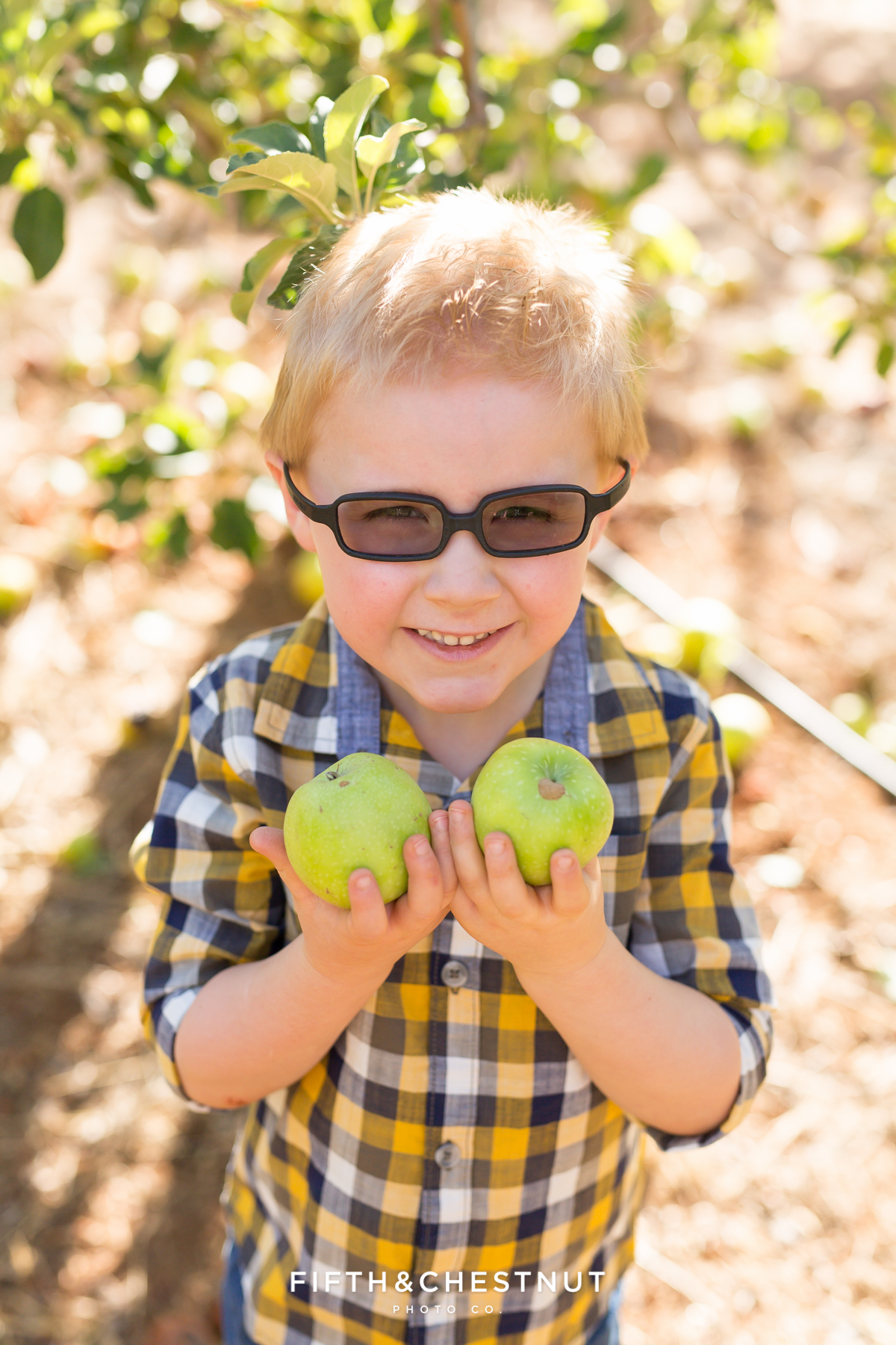 Apple Hill Portrait of little boy holding an apple by Reno Family Photographer