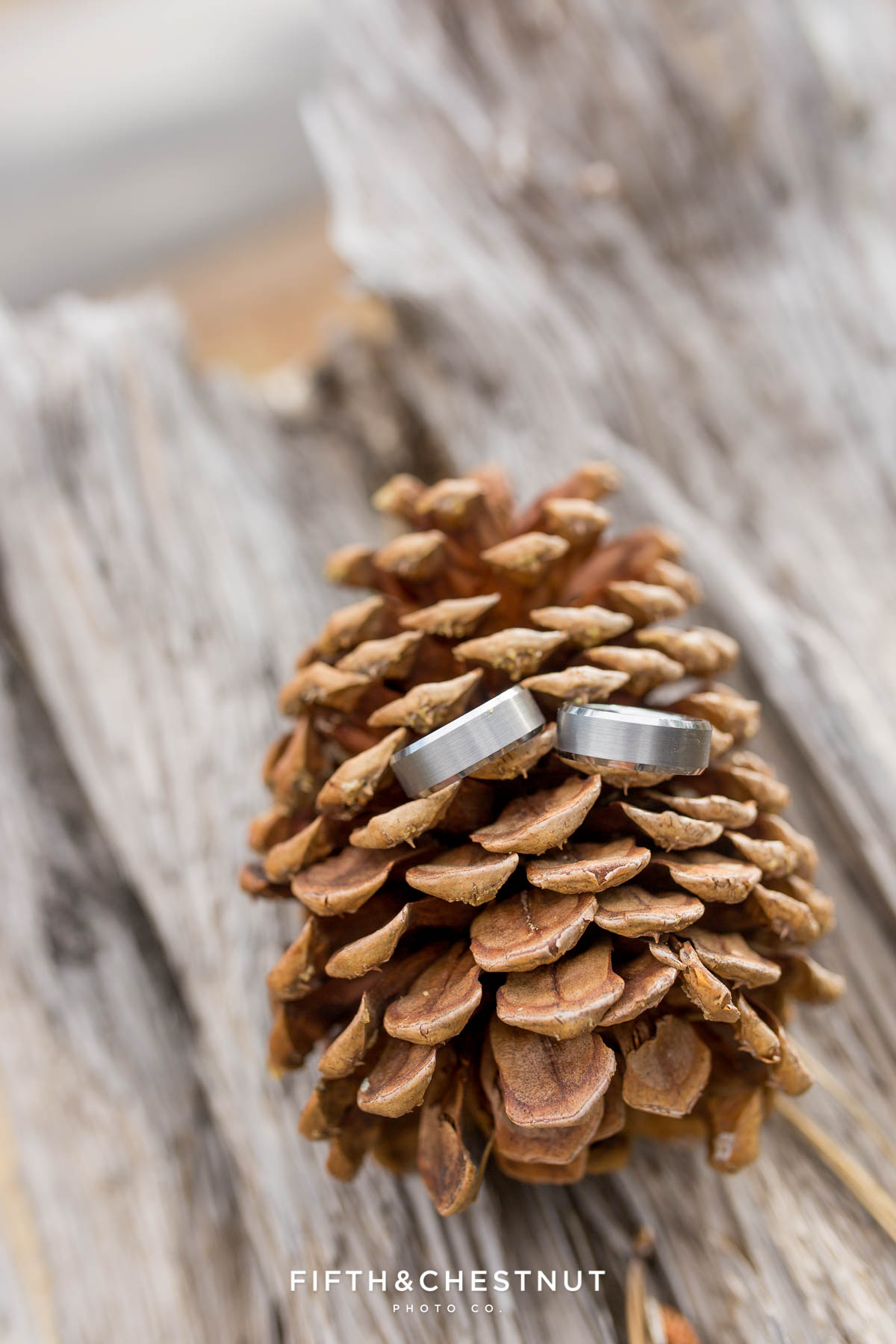 Detail photo of grooms' rings on a pine cone for their Truckee Wedding