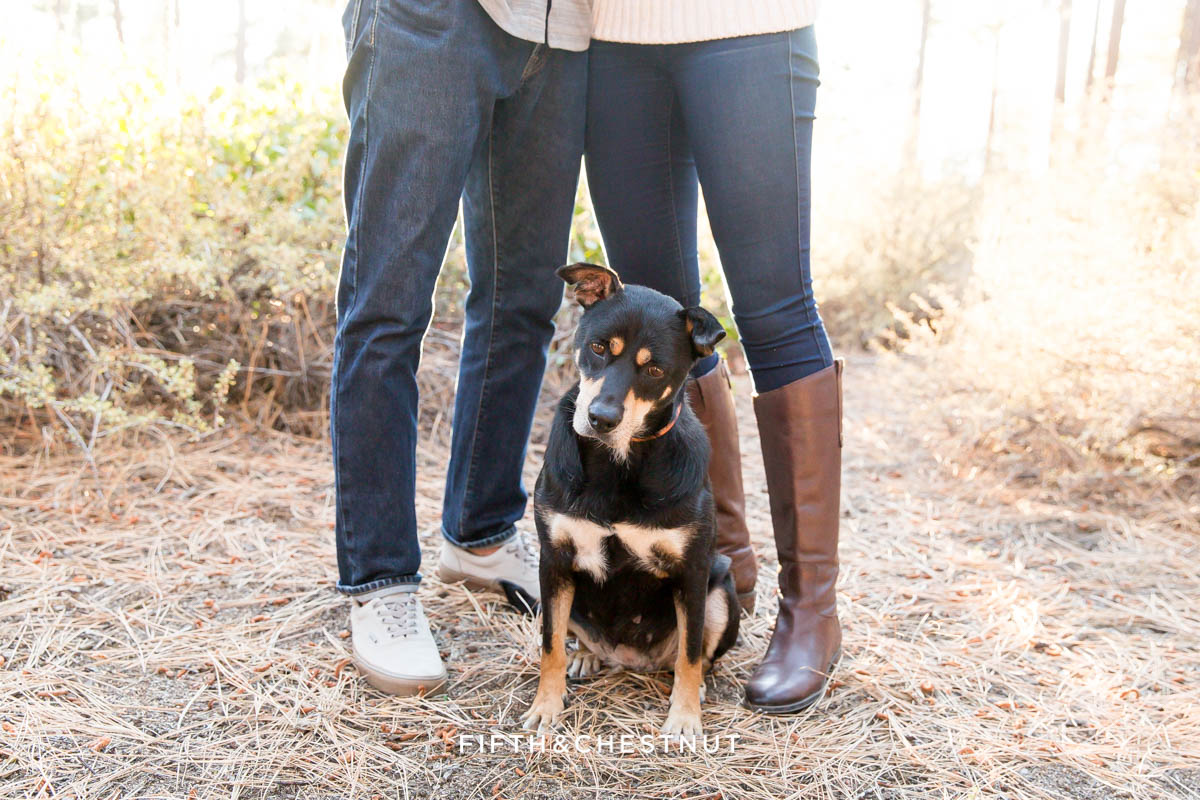 the dog of an engaged couple focuses on something during their fall Nevada Beach engagement